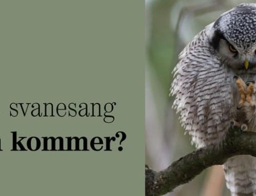 Høies svanesang – Hvem kommer?